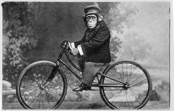Apa maksud mimpi monyet menunggang basikal? - Gambar Sumber Google
